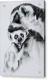Lemurs  Acrylic Print by Jean Cormier