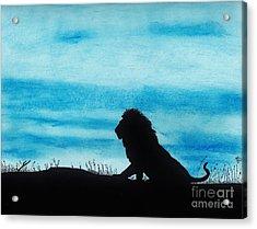 Leo At Sunset Acrylic Print by D Hackett