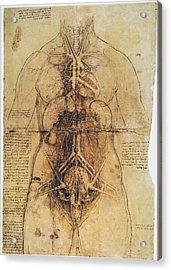 Leonardo: Anatomy, C1510 Acrylic Print by Granger
