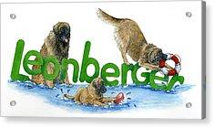 Leonberger Acrylic Print