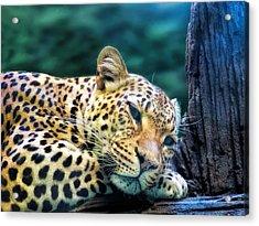 Acrylic Print featuring the photograph Leopard 1 by Dawn Eshelman