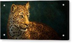 Leopard Acrylic Print by Aaron Blaise
