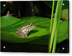 Leopard And Lily Acrylic Print by Janice Adomeit