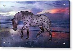 Leopard Appaloosa Acrylic Print