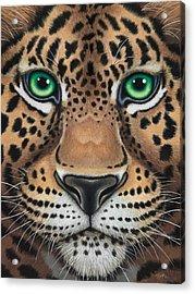 Wild Eyes Leopard Face Acrylic Print