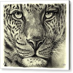 Acrylic Print featuring the drawing Leopard by Heidi Kriel