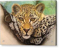 Leopard In A Tree I. Acrylic Print by Paula Steffensen