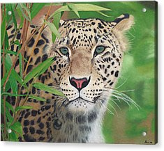 Leopard In The Woods Acrylic Print by Alina Kaplanov