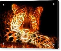 Leopard Intimidating Look Acrylic Print by Pamela Johnson