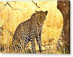 Leopard Acrylic Print by Kongsak Sumano