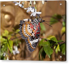 Acrylic Print featuring the photograph Leopard Lacewing Butterfly Dthu619 by Gerry Gantt