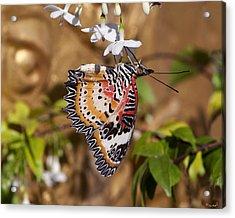 Leopard Lacewing Butterfly Dthu619 Acrylic Print by Gerry Gantt