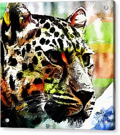 Acrylic Print featuring the painting Leopard - Leopardo by Zedi