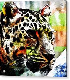 Leopard - Leopardo Acrylic Print by Zedi