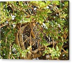 Leopard On Tree Acrylic Print by Kongsak Sumano