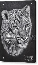Acrylic Print featuring the pastel Adams Leopard - Pastel by Adam Olsen