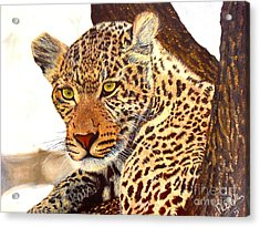 Leopard Point Of View Acrylic Print