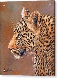 Leopard Portrait Acrylic Print by David Stribbling