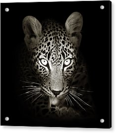 Leopard Portrait In The Dark Acrylic Print by Johan Swanepoel