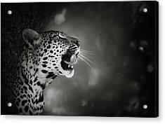 Leopard Portrait Acrylic Print by Johan Swanepoel