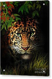 Leopard Acrylic Print by Robert Foster