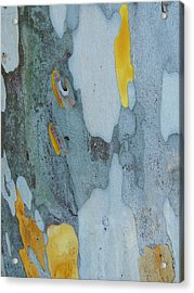 Leopard Tree Bark Abstract No 1 Acrylic Print