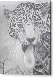 Leopard Acrylic Print by Wil Golden
