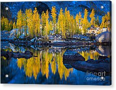Leprechaun Tamaracks Acrylic Print by Inge Johnsson