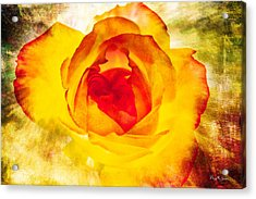 Floral - Rose - Let It Shine Acrylic Print by Barry Jones