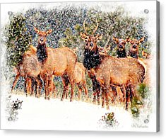 Let It Snow - Barbara Chichester Acrylic Print by Barbara Chichester