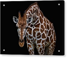 Let Me Have A Look Acrylic Print by Joachim G Pinkawa