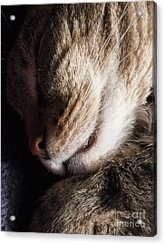 Let Sleeping Cats Lie Acrylic Print