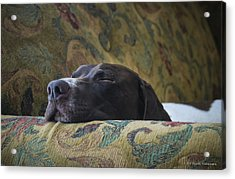 Acrylic Print featuring the photograph Let Sleeping Dogs Lie. by Phil Abrams