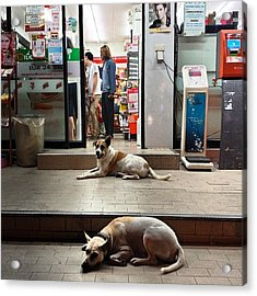 Acrylic Print featuring the photograph Let Sleeping Dogs Lie Where They May by Mr Photojimsf