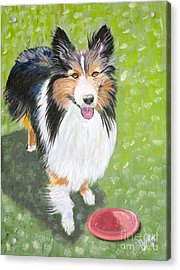 Let Us Play  Border Collie Acrylic Print by Phyllis Kaltenbach