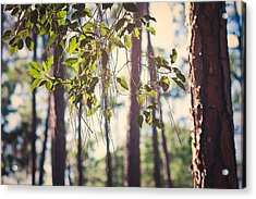 Let Your Light Shine Through Acrylic Print
