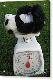 Let's Check My Weight Now Acrylic Print by Ausra Huntington nee Paulauskaite