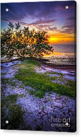 Let's Keep Looking Acrylic Print by Marvin Spates
