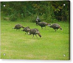 Let's Turkey Around Acrylic Print