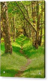 Lets Walk Along The Sunlit Woodland Path Acrylic Print by John Kelly