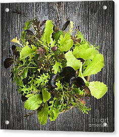 Lettuce Seedlings Acrylic Print by Elena Elisseeva