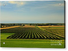 Lewiston Summer Vineyards Acrylic Print