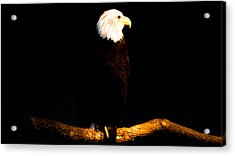 Liberty Acrylic Print by Philip Zion