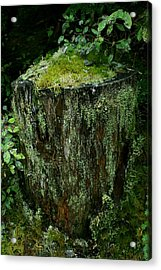 Lichen And Moss Covered Stump Acrylic Print by Amanda Holmes Tzafrir