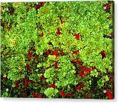 Lichen Acrylic Print by Bob Beardsley