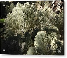 Lichen Forest Acrylic Print by Tayt Dame