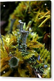 Lichen Hill Acrylic Print by Steven Valkenberg