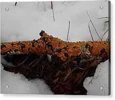Acrylic Print featuring the photograph Lichen N'snow by Robert Nickologianis