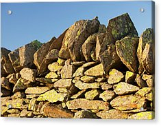Lichen On A Dry Stone Wall Acrylic Print by Ashley Cooper