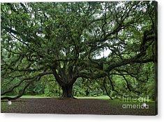 Lichgate Oak Acrylic Print